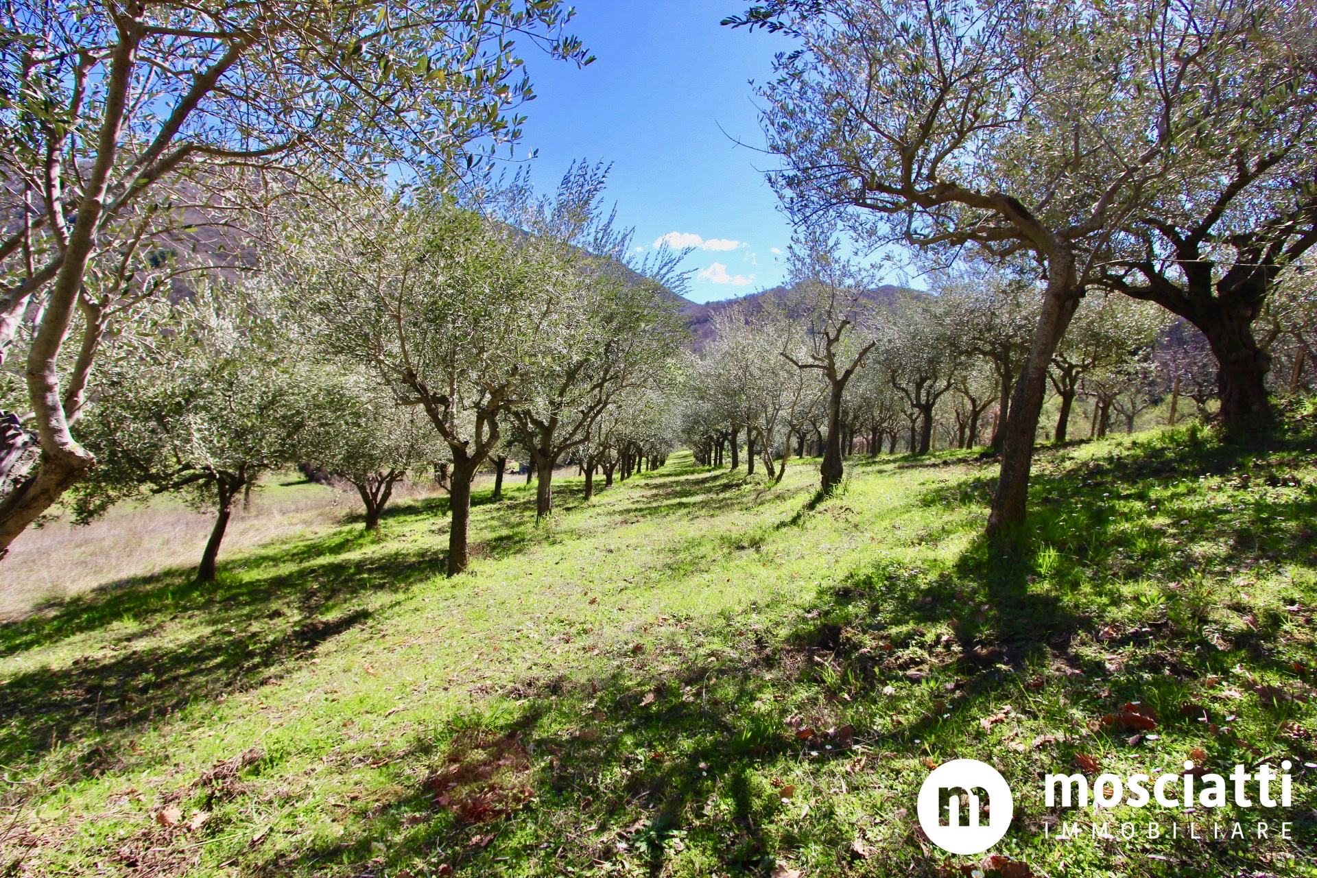 Matelica, Frazione Rastia, vendiamo rustico da ristrutturare con oliveto - 1